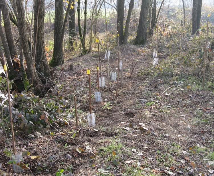 Vivaio Forestale Curno : Osservazioni 2010 e 2011